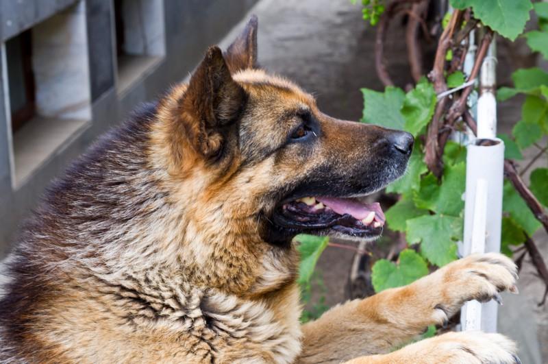 Дистанционный контроль за собаками