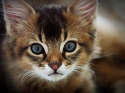Кошки аккуратны и не разбрызгивают воду