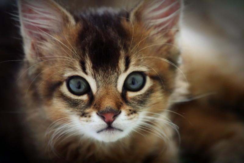 Кошки лучше всех