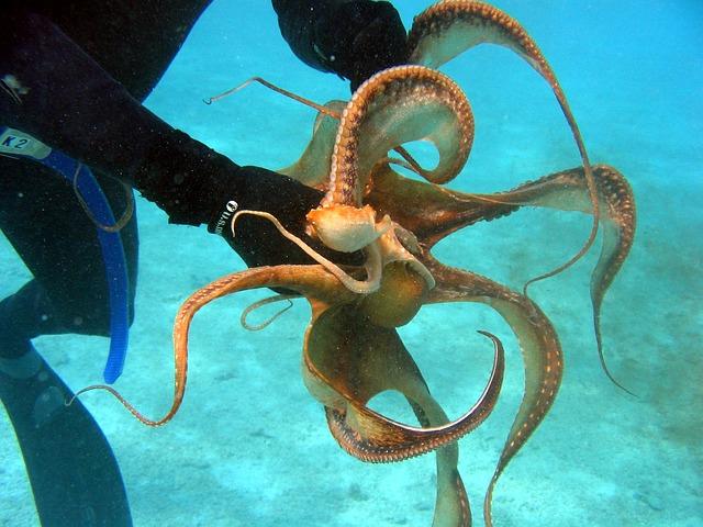 От осьминога до искусственногоо интеллекта