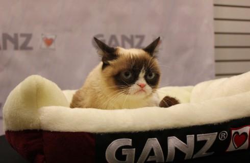 Сердитый кот обогащает хозяев