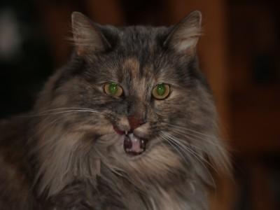 Видео с кошками приносит доход