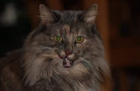 Просмотр видео с кошками приносит деньги