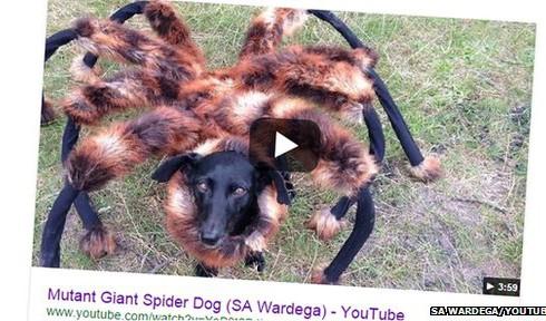 Гигантский паук покорил Интернет