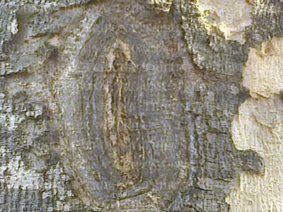 Рисунок на дереве в Мексике