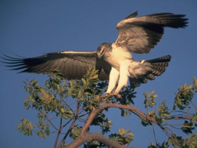 Пение птиц  бывает разным