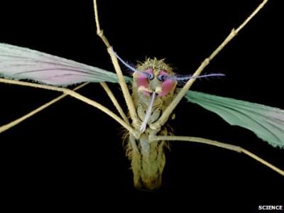 Вирус малярии переносится комарами