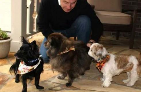 Отель поможет бездомным животным