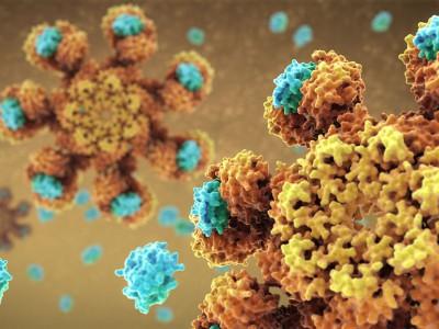 Анализ раковых клеток