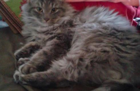 Ледяной кот вернулся к жизни