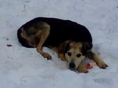 Бездомный пес Чарли