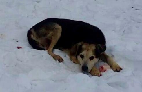 Американский пес спасся от холода
