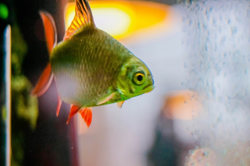 Ваши рыбы останутся довольны