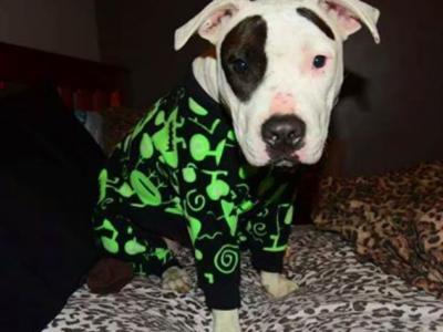 Пижамы для питбулей