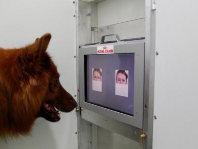 Собаки различают эмоции: эксперимент с распознаванием эмоций
