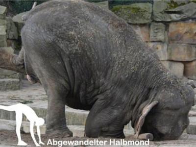 Йога-слон Луиза