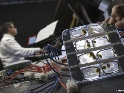 Музыкальный биокомпьютер с применением грибка
