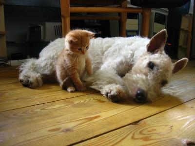 Собаку или кошку заводят в дополнение к своему характеру