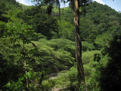 Два затерянных города в джунглях Гондураса