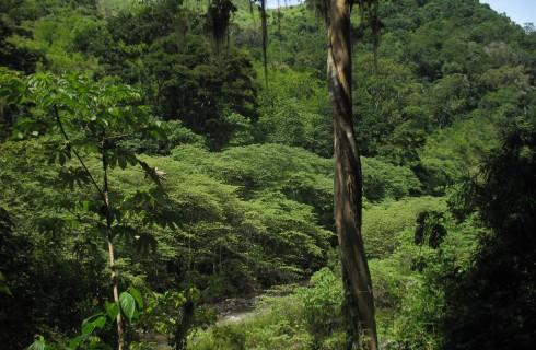 Джунгли Гондураса скрывали легендарный город бога обезьян