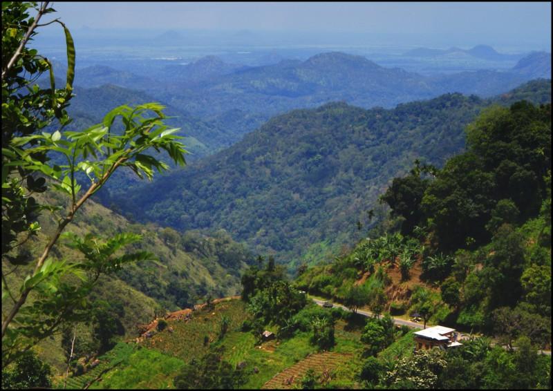 Тропические леса древности не были безлюдными