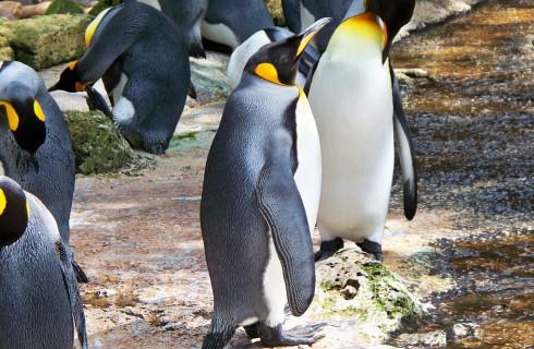 Пингвинов устраивает нынешний климат