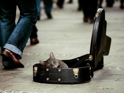 Кошки любят музыку