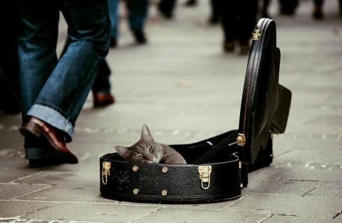 Кошки требуют особую музыку