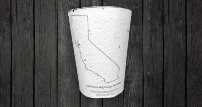 Кофейные чашки остановят вырубку леса