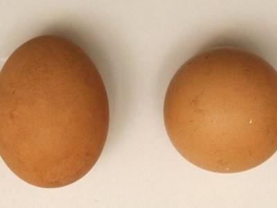 Идеальное яйцо
