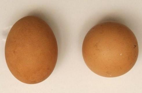 Яйцо для перфекционистов стоит 700 долларов