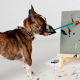 Собака зарабатывает созданием картин