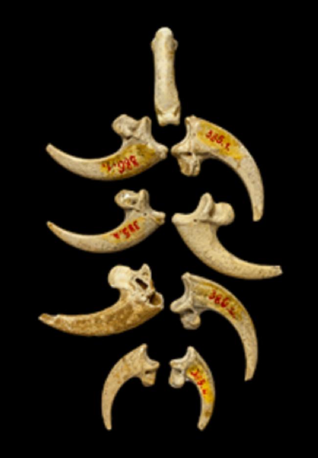 Ювелирные украшения изобрели неандертальцы