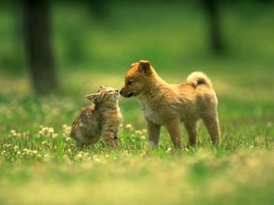 Аллергия у животных — не редкость