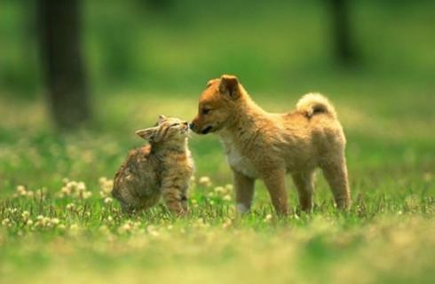Как избавить животных от сезонной аллергии