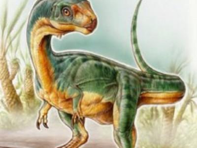 Динозавр-вегетарианец Chilesaurus diegosuarezias