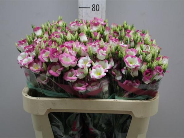 Цветочный бизнес: прибыльная красота
