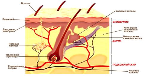 Как проходит процесс заживления раны?