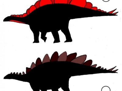 Стегозавры с разными пластинами