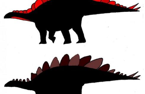 Стегозавры разного пола отличались внешне