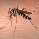 Комары предпочитают людей с определенным типом генов