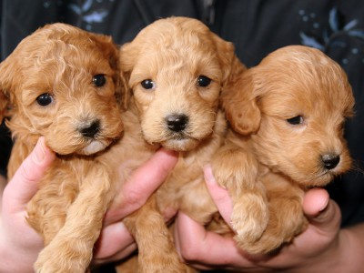 Испытывать умиление при виде маленьких щенков — абсолютно естественно
