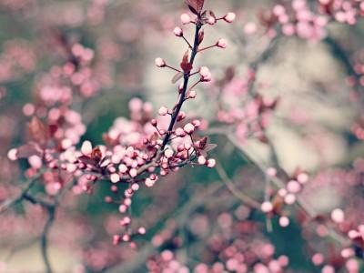 Очистить организм к весне поможет зелень