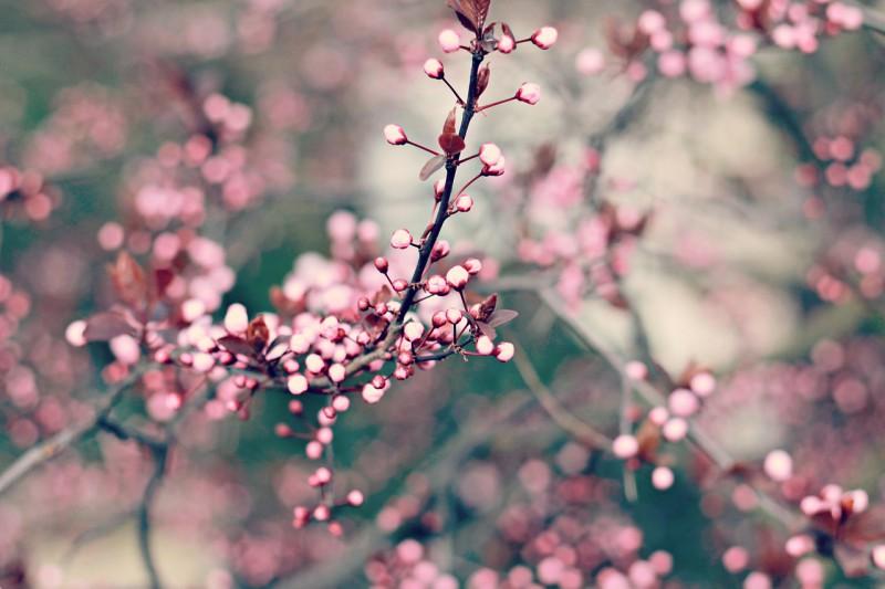 Простые способы почувствовать приход весны