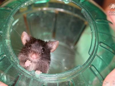 Запуск мышонка в стратосферу. Мышонок Шум в специальном шаре