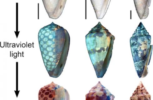 Ученые распознали цвет древностей