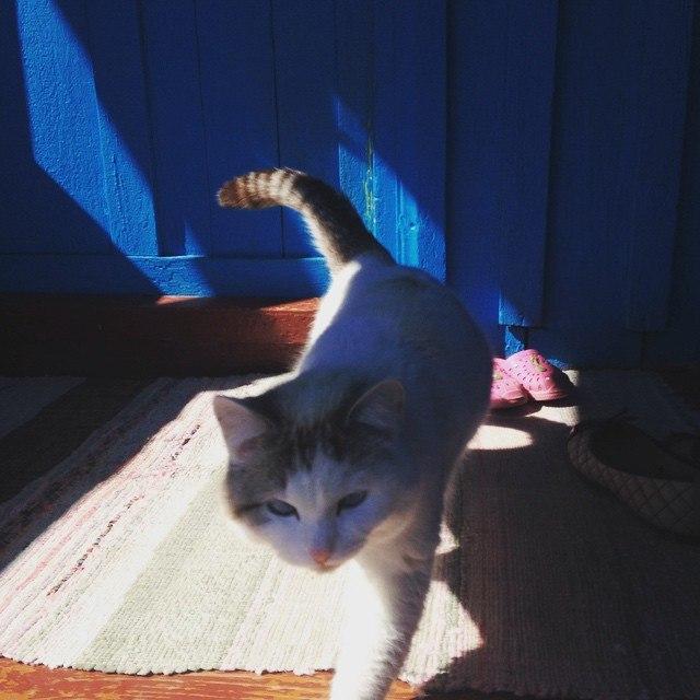Кошки рассказали ученым о чувствах