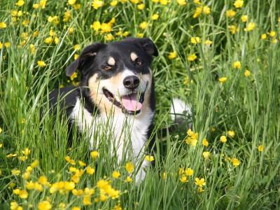 Собаки едят траву