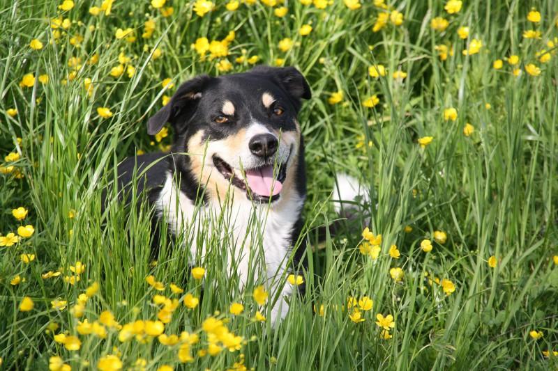 Собакам нужна трава
