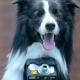 Nikon превращает собак в фотографов